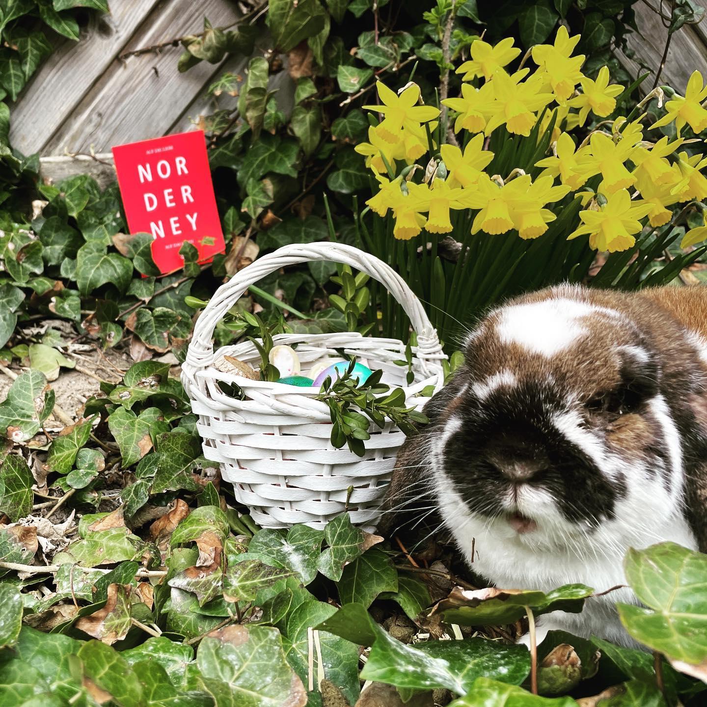 Frohe Ostern  #ostern2021 #ahoi_norderney #ferienhauspapenfuß #osterhase #aufdieliebe #aufdasleben #norderney_meineinsel #nordernyliebe #ostergruß